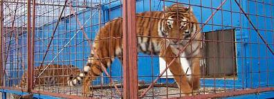 Kein Applaus für Tierausbeutung